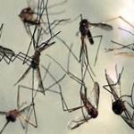 Scientists find Clue to track resistance to Malaria drug