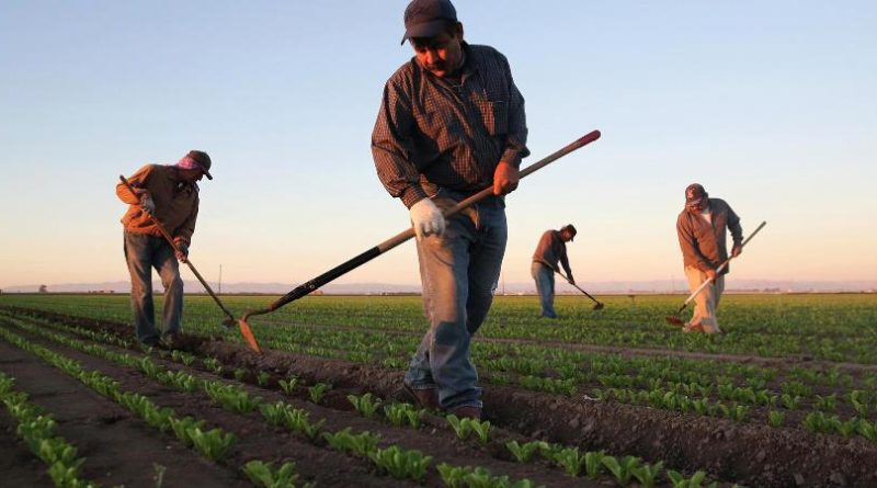 Workers shortage in US farms