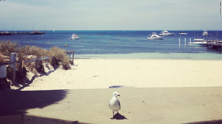 7 islands perfect for day trips Rottnest Island Western Australia