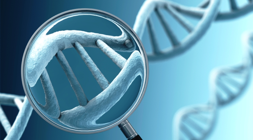 dna is it worth the risk Stop the dna insanity you could be putting your entire tribe at risk we do it anyway because it is worth living.